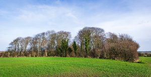 EB8: Protecting trees and woodland